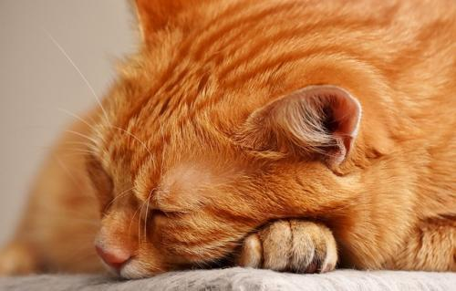 cat sleeping anxiety relief techniques