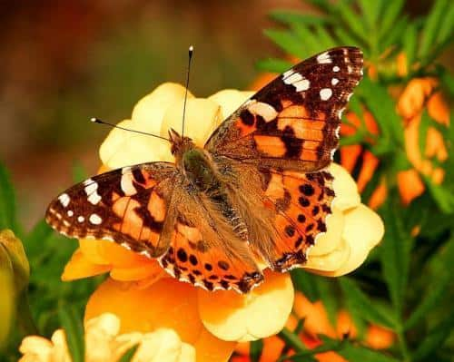 clarity breathwork uses rebirthing concept butterfly